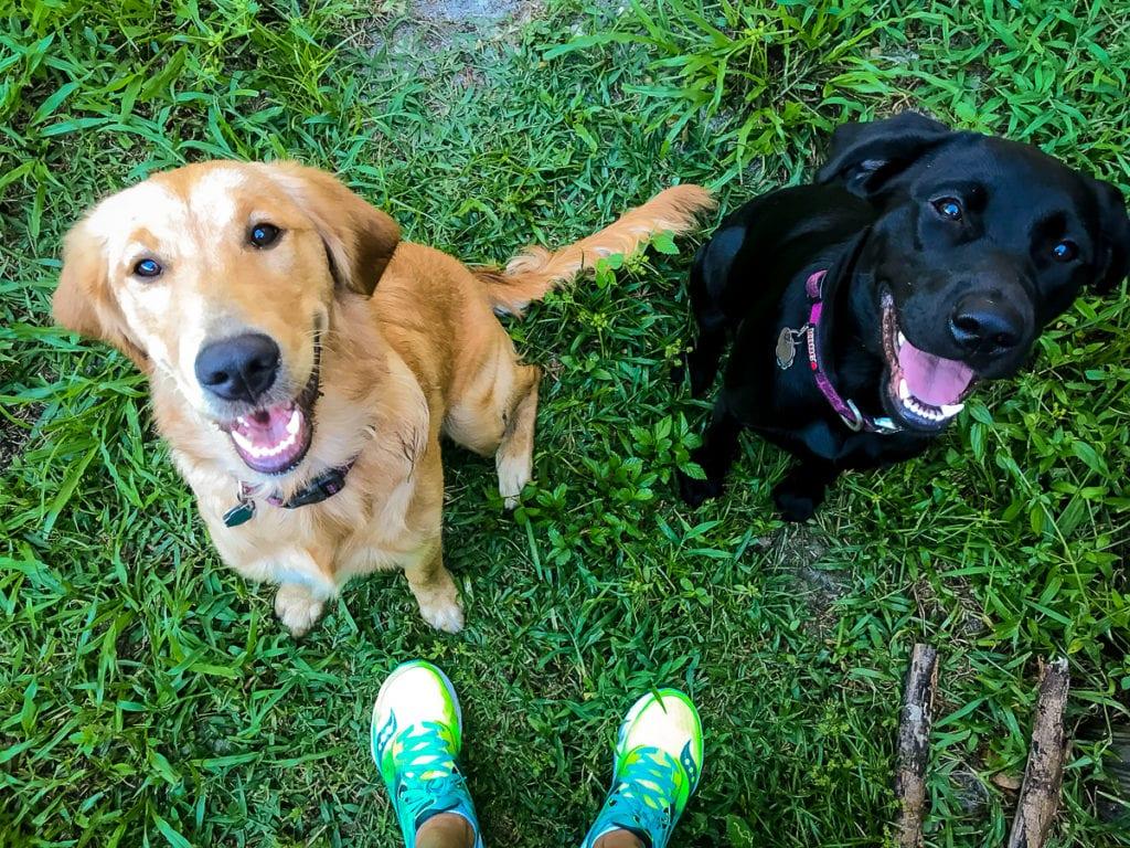 Training Journal Sunday Dogs