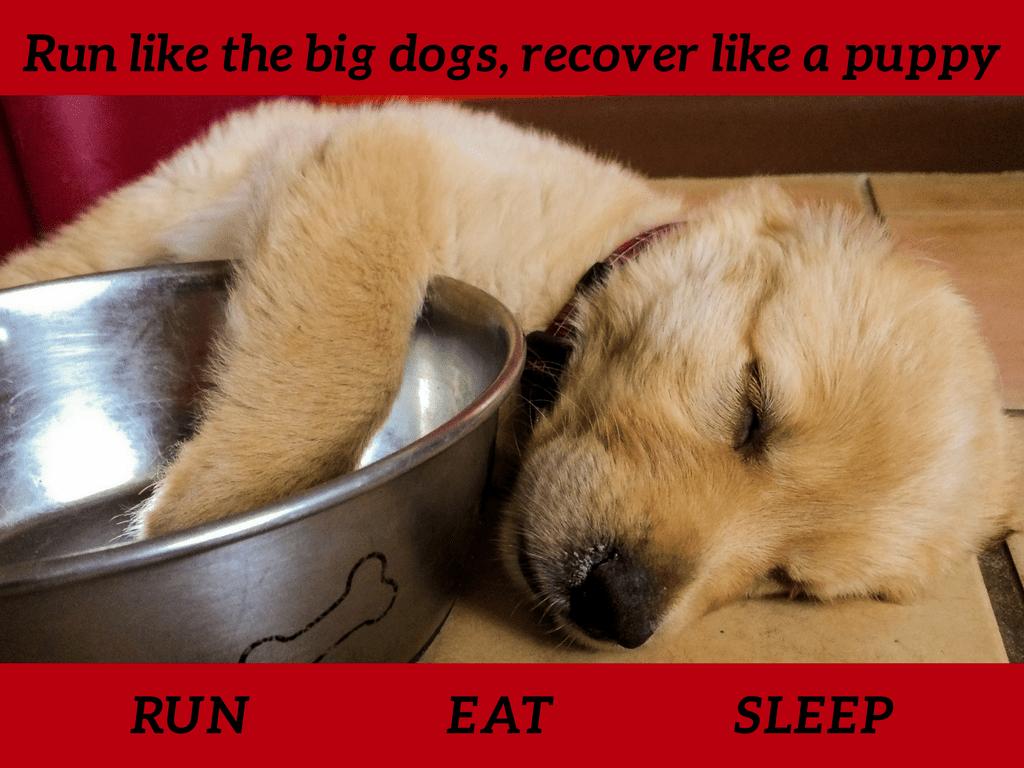 Rest Like a Dog